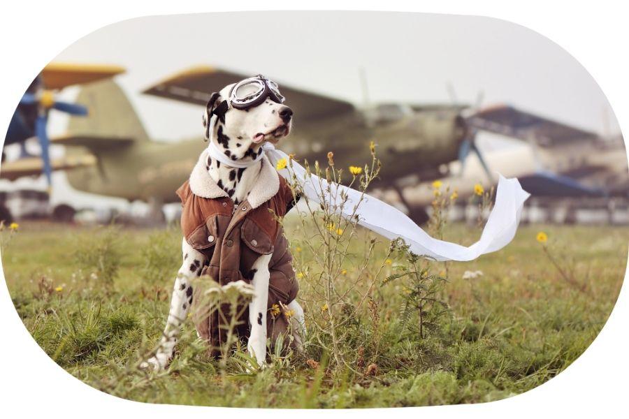 viajes pet-friendly