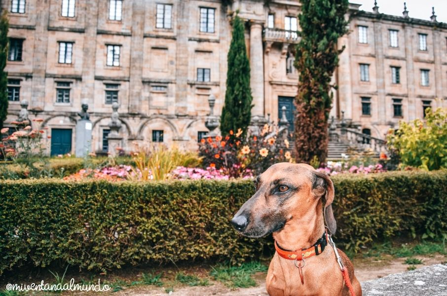Rías Baixas con perro